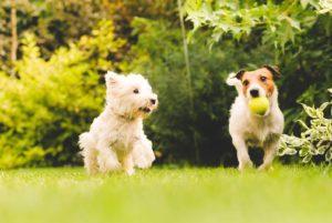 Dog friendly holiday park in North Devon
