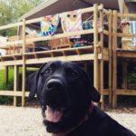 Anna-Summerfield-Dog-Safari-Tents